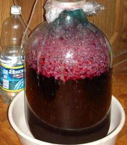 Приготовить домашнее вино из изабеллы